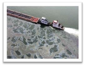 Green Ways To Clean Up Oil Spills