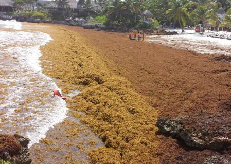 seaweed-problem-beach-resorts